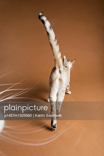 Katzen - p1457m1525560 von Katrin Saalfrank