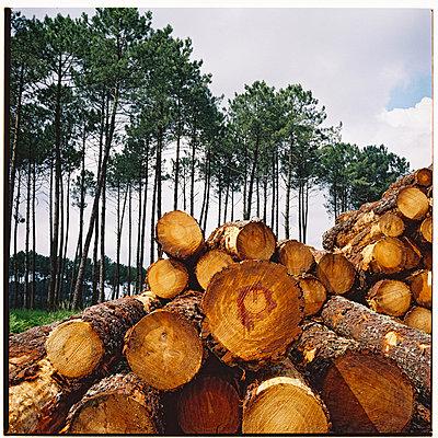 pile of wood   - p5673492 by Sandrine Agosti-Navarri
