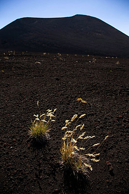 Volcano and plants in Chile - p6280412 by Franco Cozzo