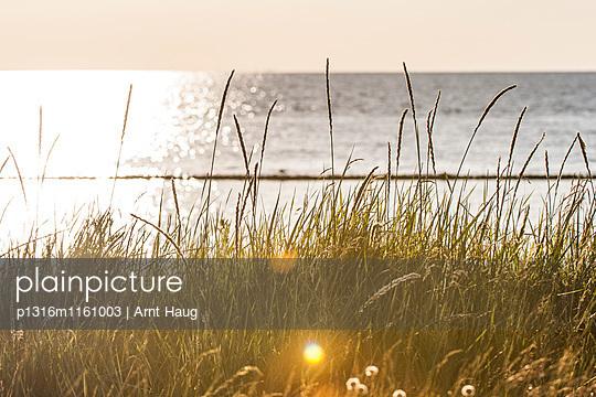 Wattenmeer im Sonnenaufgang, Keitum, Sylt, Schleswig-Holstein, Deutschland - p1316m1161003 von Arnt Haug