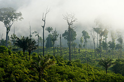 Brazil, Para, Itaituba, Amazon rainforest, slash and burn - p300m1129822f von Florian Kopp