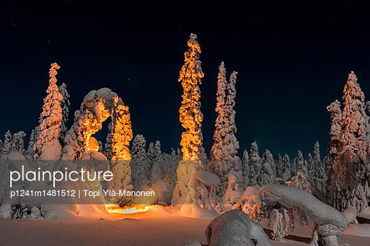 Snow Forest - p1241m1481512 by Topi Ylä-Mononen