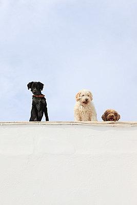 Watchdogs - p0452326 by Jasmin Sander