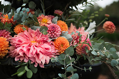 Close-up of fresh flowers blooming at park - p1166m2024995 by Cavan Social