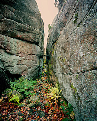 Crevice between two rocks - p312m714732 by Bruno Ehrs