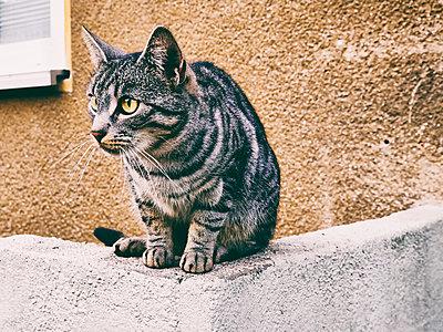 Die Katze auf der Mauer - p358m1481572 von Frank Muckenheim