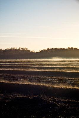Nebel im Moor - p989m1193773 von Gine Seitz