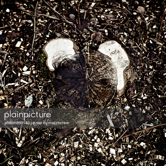 Tree stump - p586m890140 by Kniel Synnatzschke