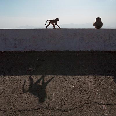Zwei Affen auf einem Dach in Asir, Saudi-Arabien - p1542m2173618 von Roger Grasas