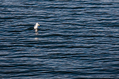 Seagull - p741m2108948 by Christof Mattes