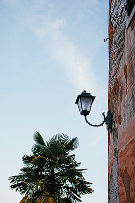 Outdoor lamp on house wall with palm tree - p728m2027202 by Peter Nitsch