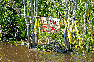 Alligator in the water under a sign that says enter at own risk;New orleans louisiana united states of america - p442m767745f by Jim Julien