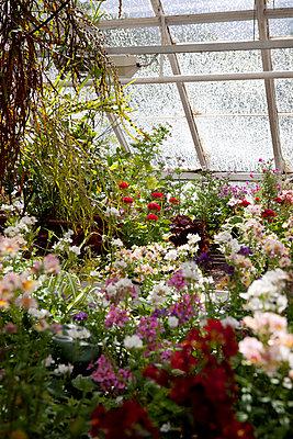 Flowers in the Greenhouse   - p8477358 by Emelie Asplund