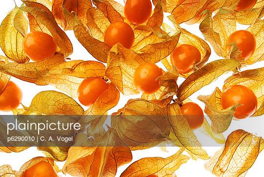 Physalis - p6290010 von C. A. Vogel