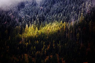 Herbstwald - p415m1149758 von Tanja Luther