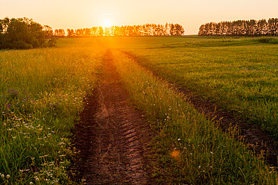 Tire tracks in rural field at sunset - p555m1411652 by Aliyev Alexei Sergeevich