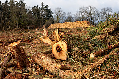 Deforested area and stacked logs - p445m1496604 by Marie Docher