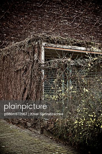 Kletterpflanzen wuchern über Zaun und Mauer - p586m972967 von Kniel Synnatzschke