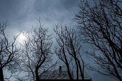 Roof of house with gnarly tree tops - p1047m1087401 by Sally Mundy