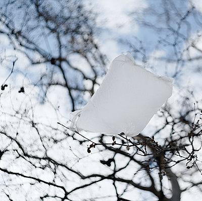 Plastic bag in a tree - p1578m2272068 by Marcus Hammerschmitt