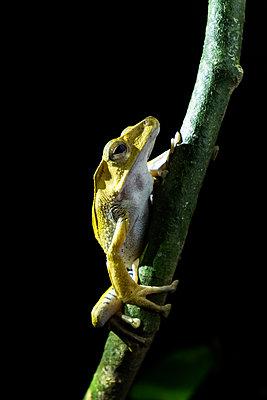 Frosch - p842m1558883 von Renée Del Missier