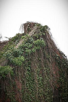 Overgrown - p403m890191 by Helge Sauber