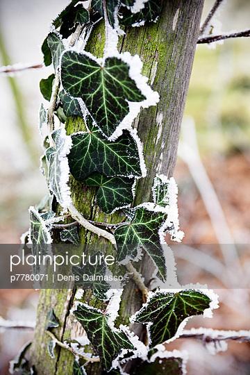 Raureif - p7780071 von Denis Dalmasso