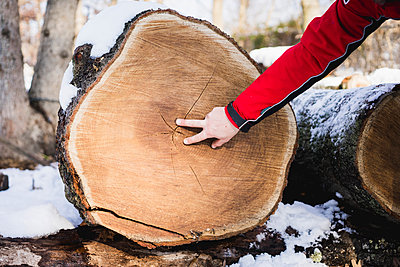 Cropped hand of man examining tree stump in backyard during winter - p1166m1534249 by Cavan Images