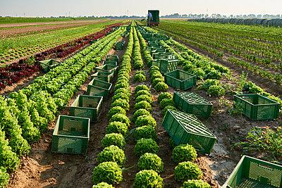 Biolandwirtschaft - p1203m1025899 von Bernd Schumacher