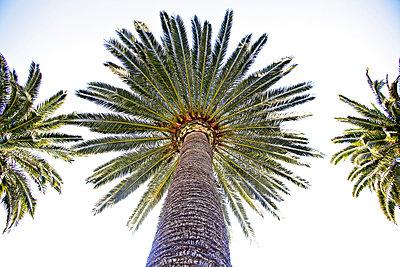 Palmen am Strand, Finale Ligure, Provinz Savona, Ligurien, Italien - p1316m1160799 von Christoph Jorda