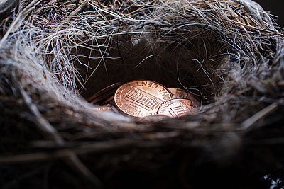 Pile of pennies in nest - p555m1504230 by REB Images