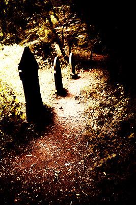 Gravestones in dark cemetery - p597m901733 by Tim Robinson
