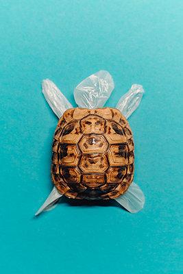 Turtle - p750m2273047 by Silveri
