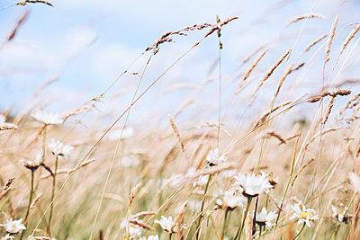 Wiese mit Wildblumen - p1006m1425240 von Danel