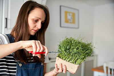 Woman harvesting microgreen pea seedlings using scissors - p1100m2271623 by Mint Images
