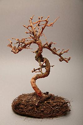 Toter Bonsai I - p165m853621 von Andrea Schoenrock