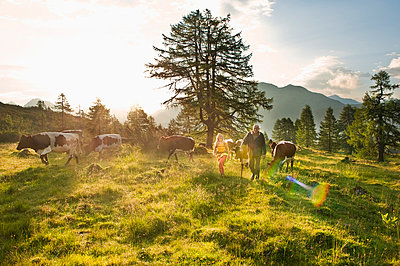 Woman and farmer walking in alpine meadow with cows - p300m659911f by Hans Huber