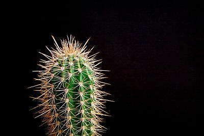 Mein kleiner grüner Kaktus - p3180149 von Christoph Eberle