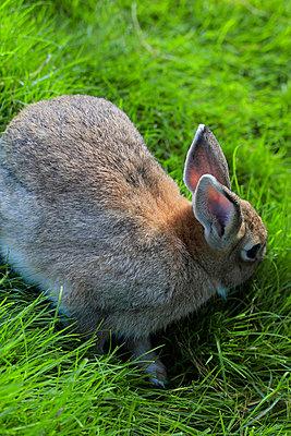 Kaninchen - p450m735052 von Hanka Steidle