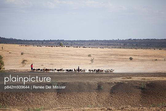Flock of sheep in Serengeti - p842m939644 by Renée Del Missier