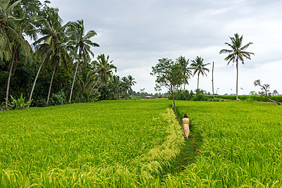 Young woman in the bright dress walking through the rice fields - p1166m2124276 by Cavan Images