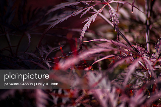 Plant with jagged leaves - p1640m2245898 by Holly & John