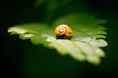 Snail - p417m702574 by Pat Meise