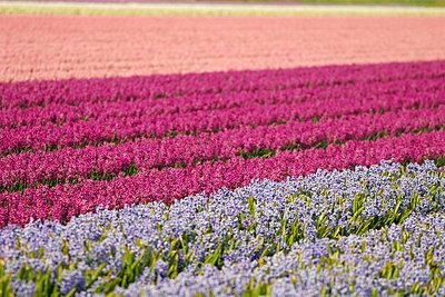 Blumenfelder - p4170011 von Pat Meise
