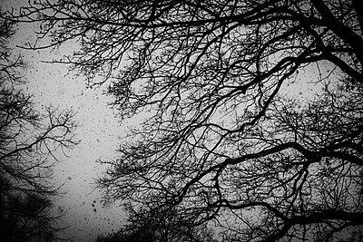 Tree in winter - p858m2272631 by Lucja Romanowska