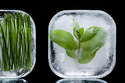 Frozen herbs - p9248373f by Image Source
