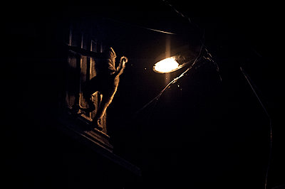Monkey climbing at night - p1007m1144375 by Tilby Vattard