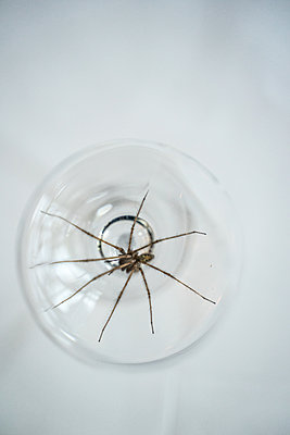 Spider in a glass - p1402m2206401 by Jerome Paressant