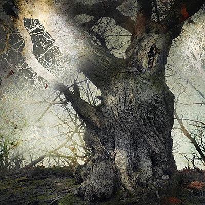 Darkwood - p1633m2211073 by Bernd Webler