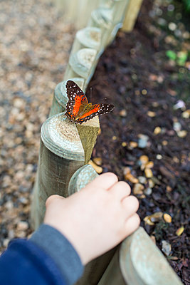 Butterfly - p535m912011 by Michelle Gibson
